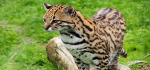 Camperdown Wildlife Centre ready to welcome back visitors